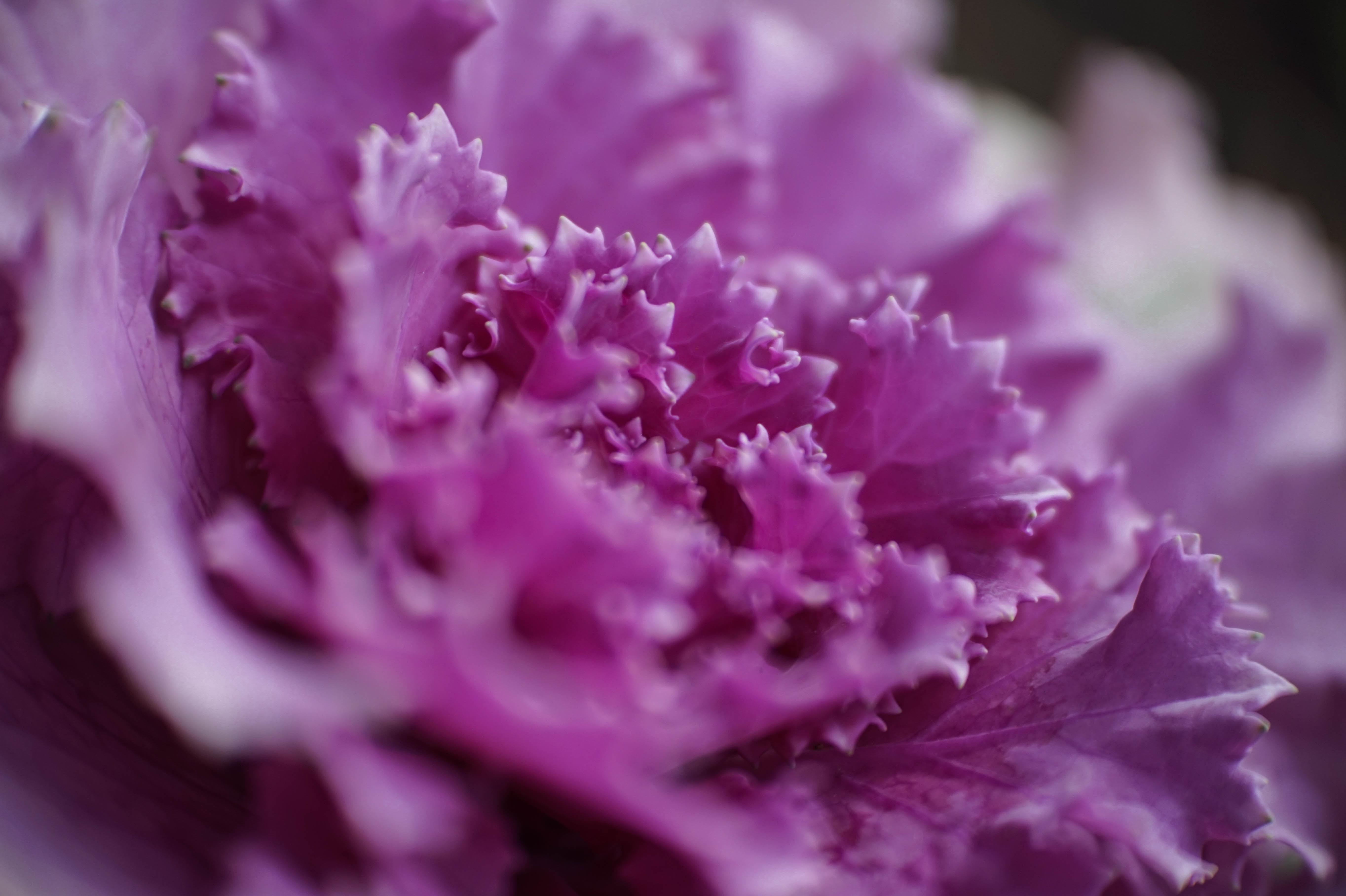 purplepetaled flower