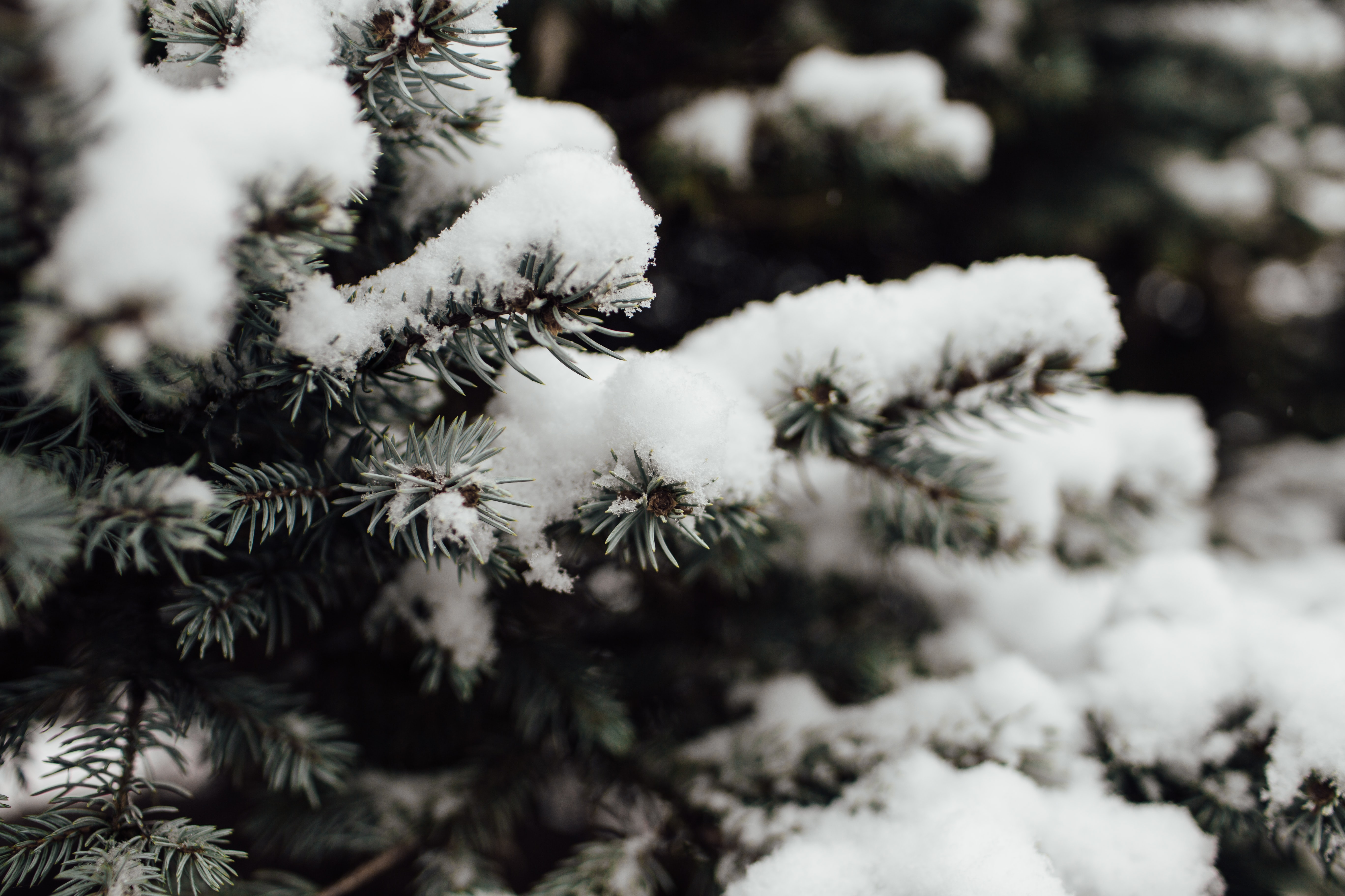 snow covered tree in macro photography