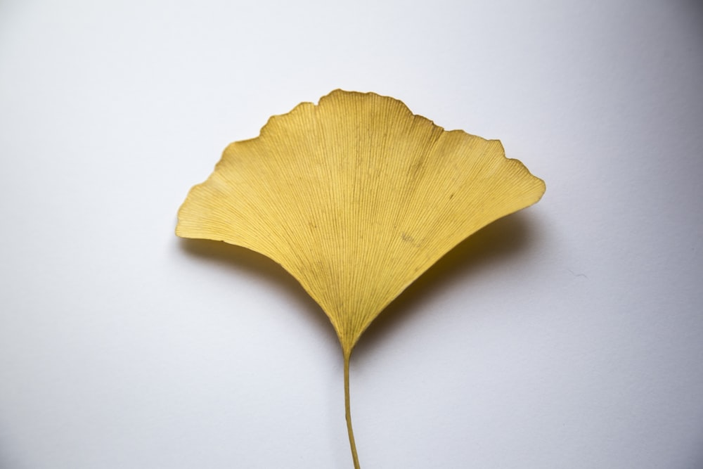 yellow leaf on white surface