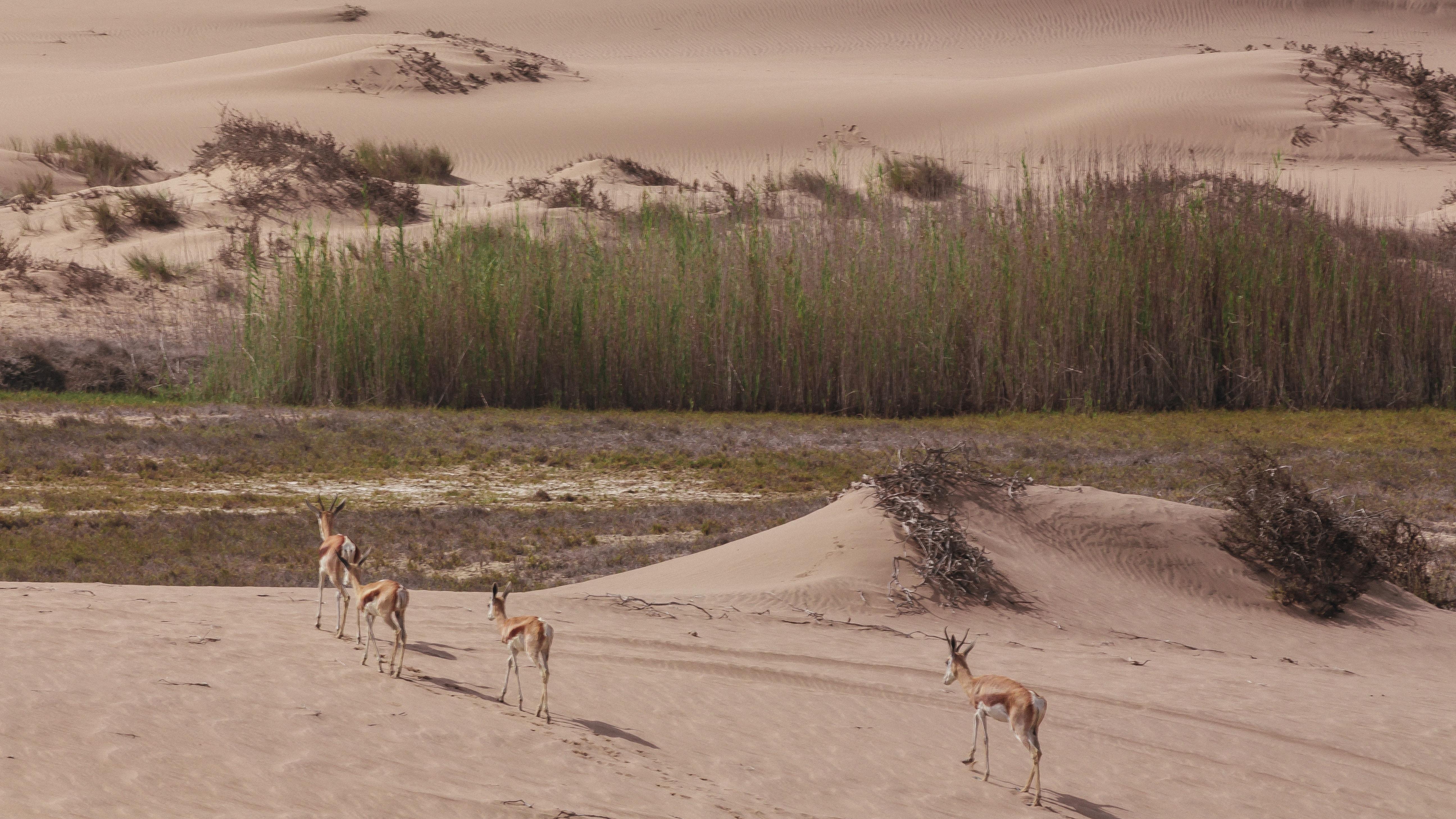 four animal walking towars the green trees painting