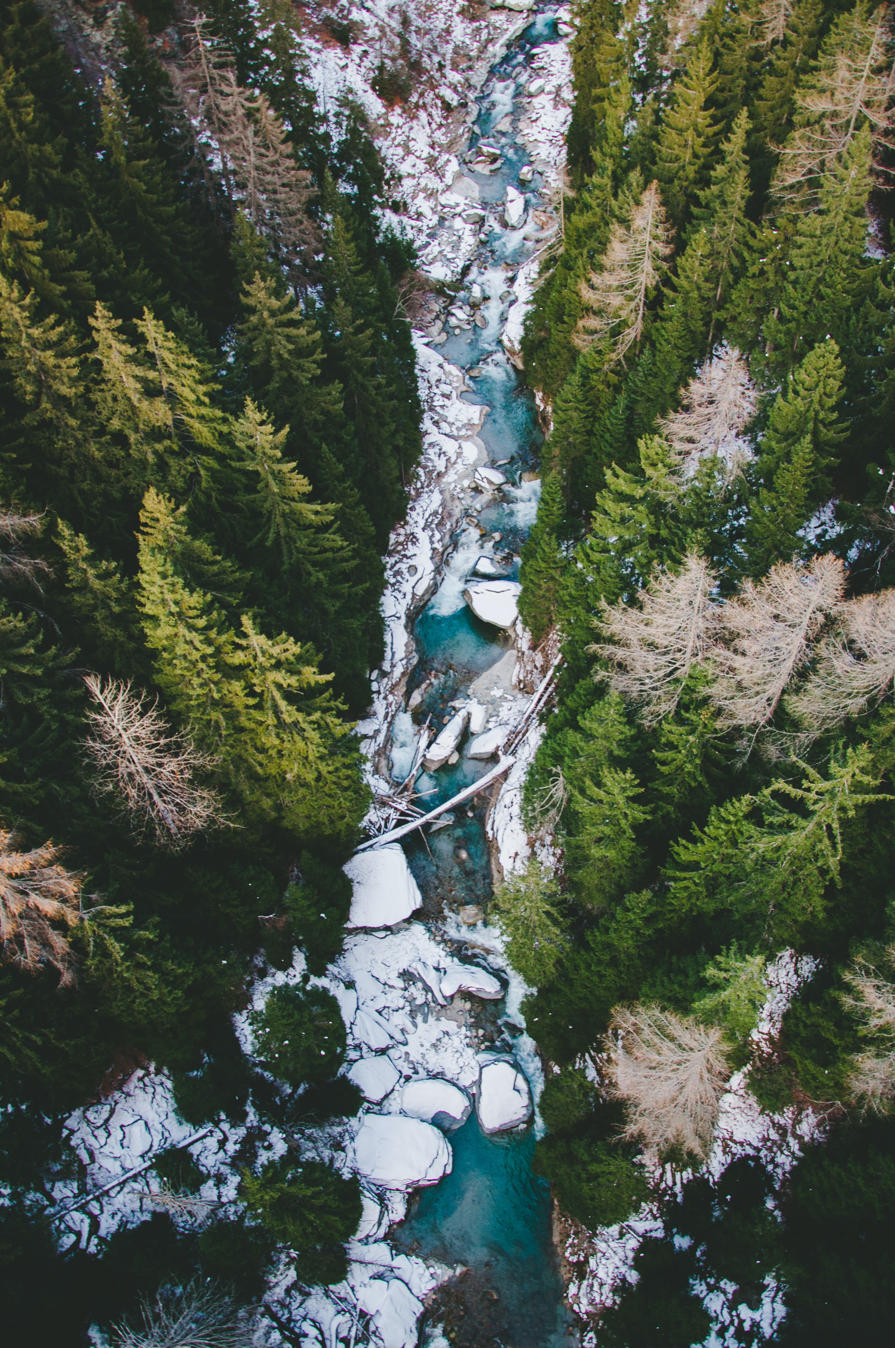 aerial photography of body of water between pine trees