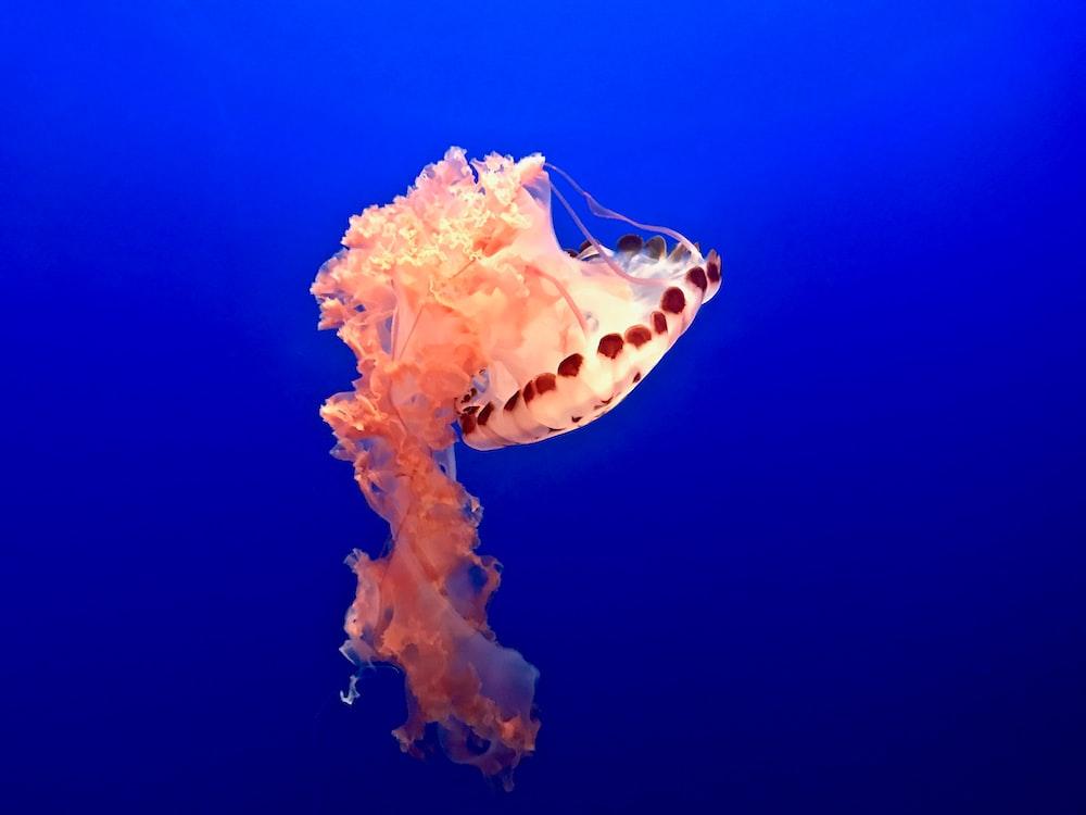 swimming pink and white jellyfish