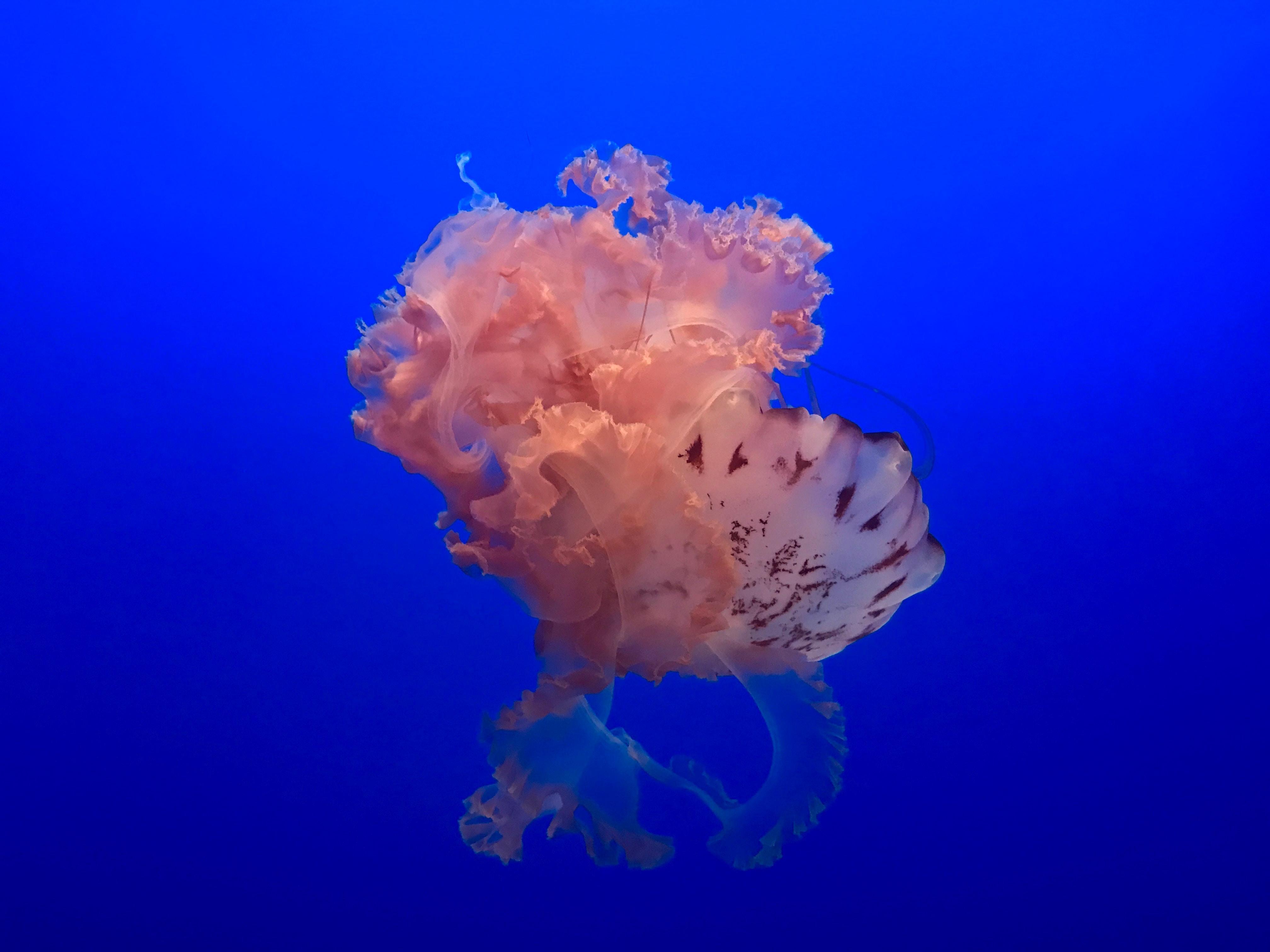 jelly fish on sea