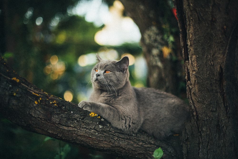 gray cat on top of tree branch
