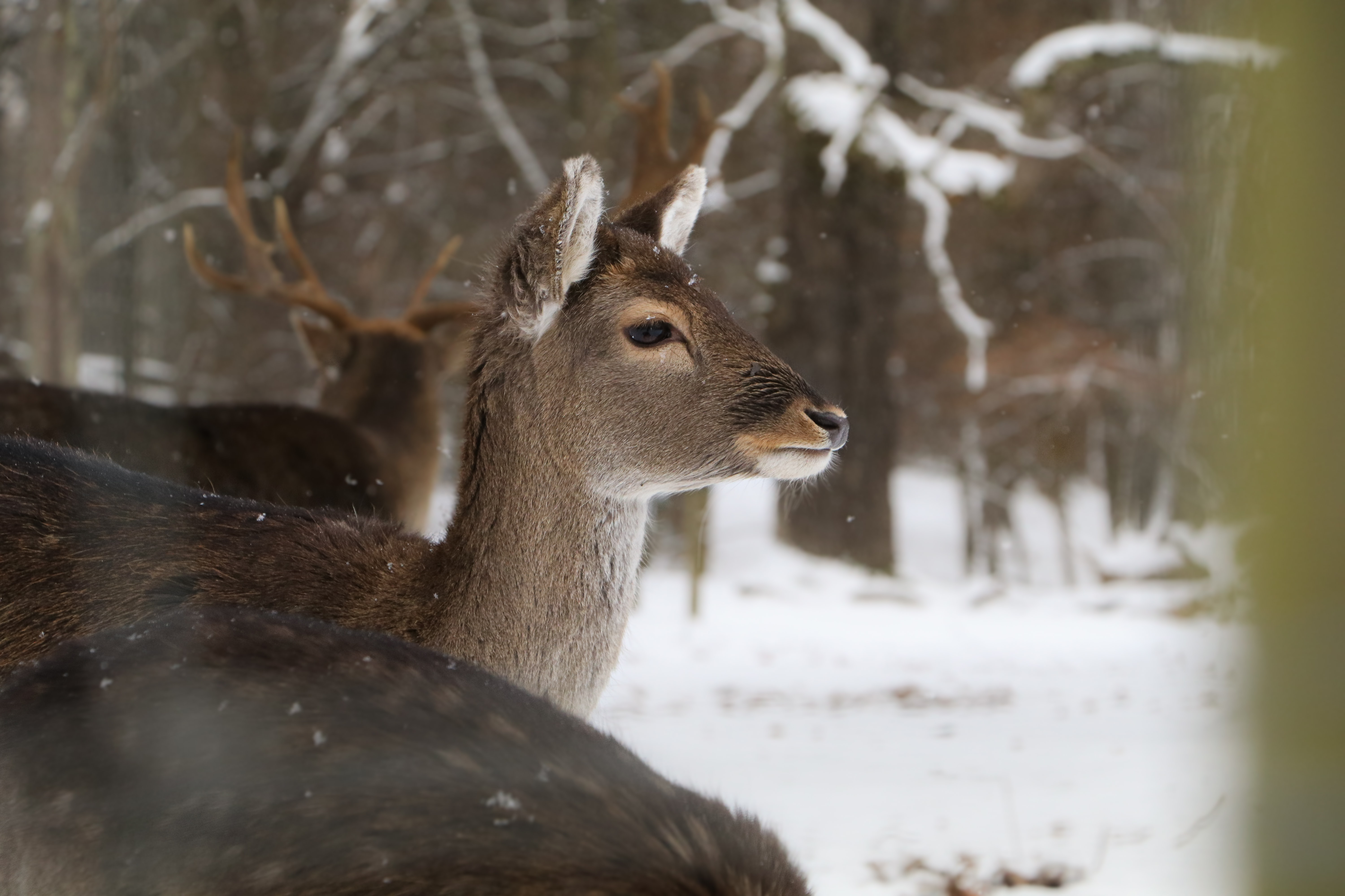 selective focus photography of calf deer on snow field