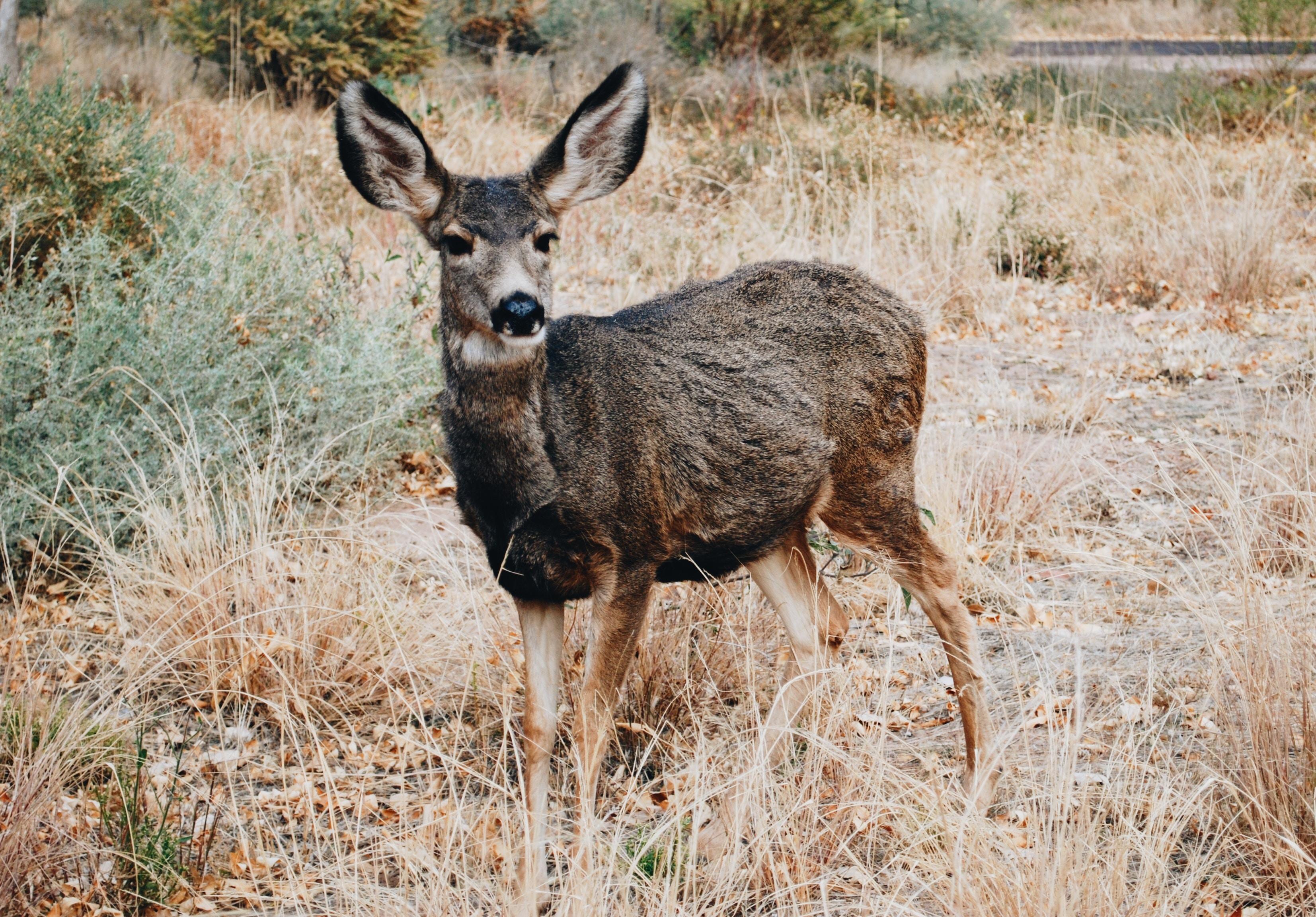 brown deer on grass at daytime