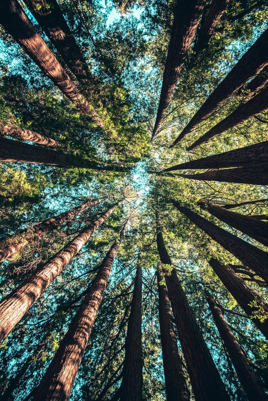 Cedar Tree Pictures   Download Free Images on Unsplash