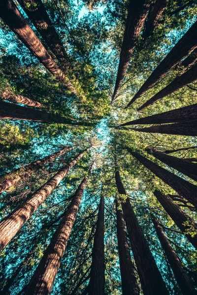 low angle photography of trees at daytime