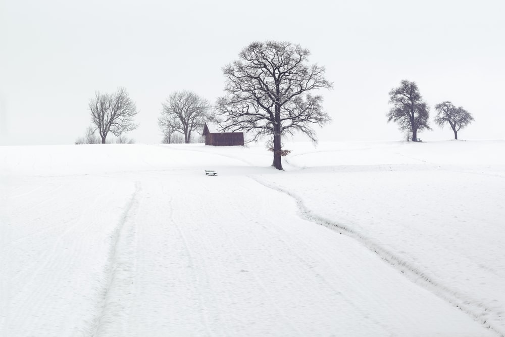 house surrounded by withered trees and snow