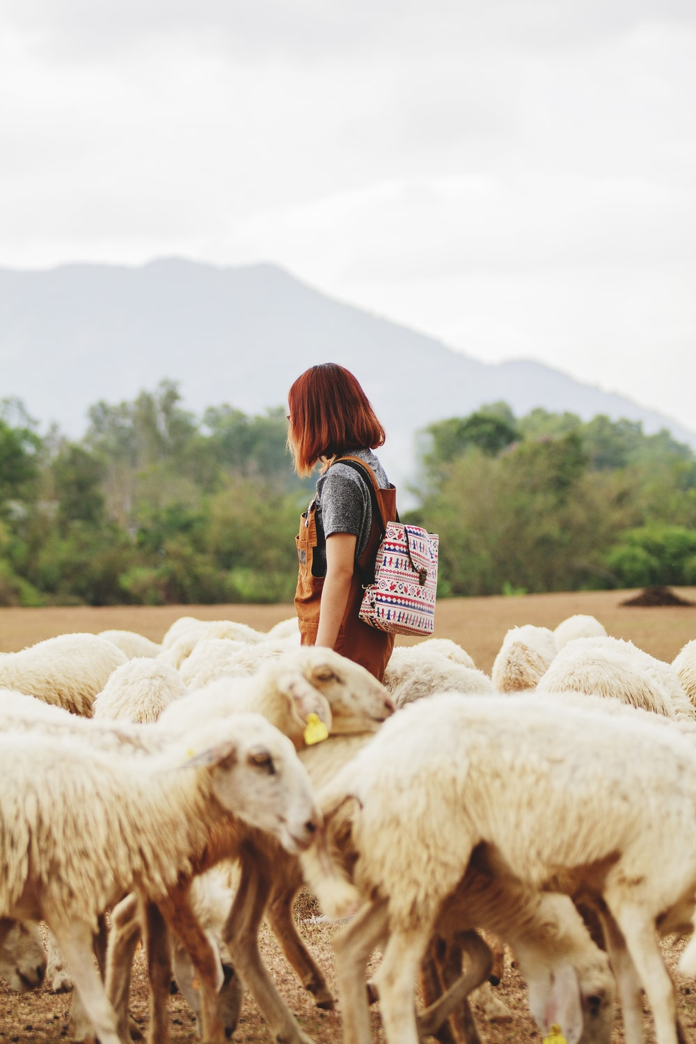 woman surrounded by sheep under cloudy sky