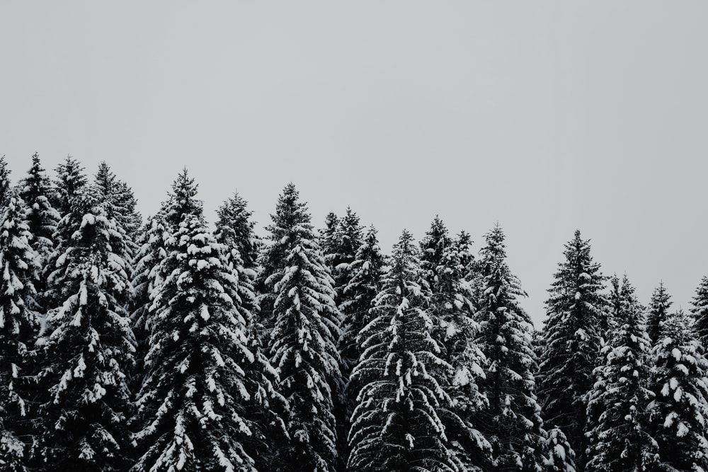 tree covered snow under cloudy sky