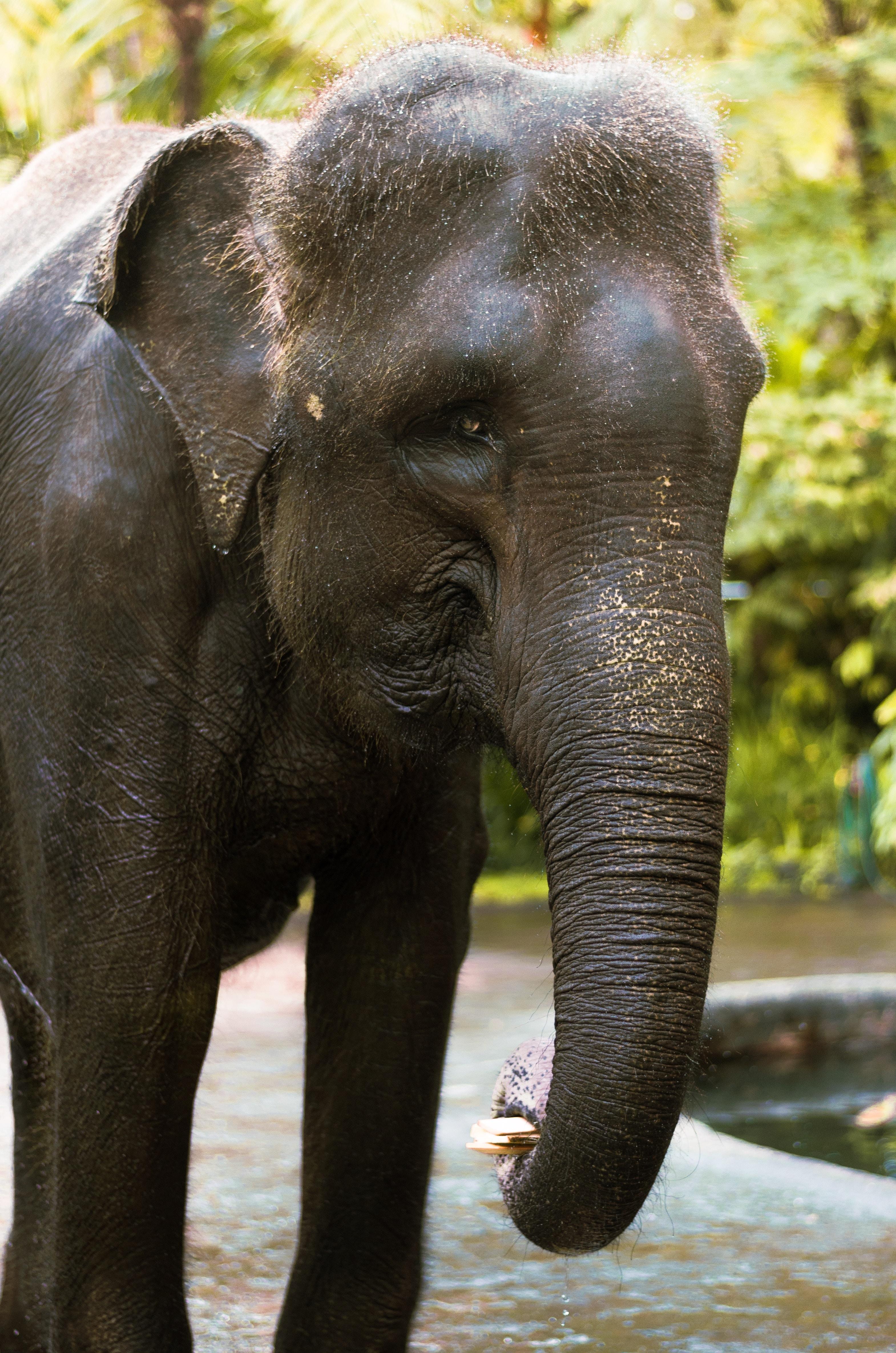 photography of elephant