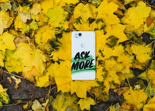 white smartphone on yellow maple leaves