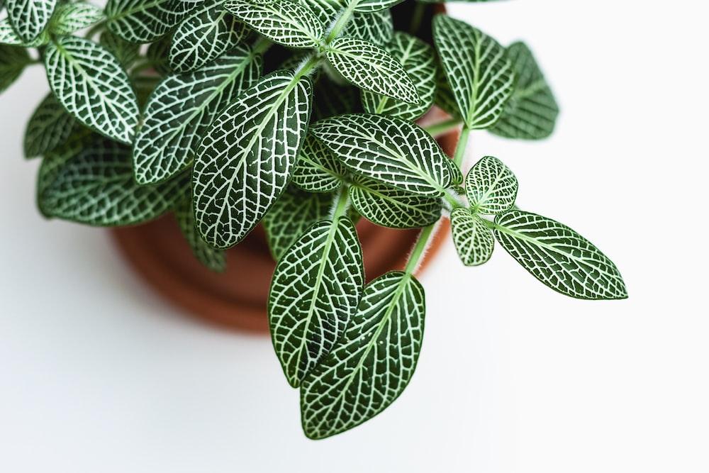 green indoor plant in brown pot