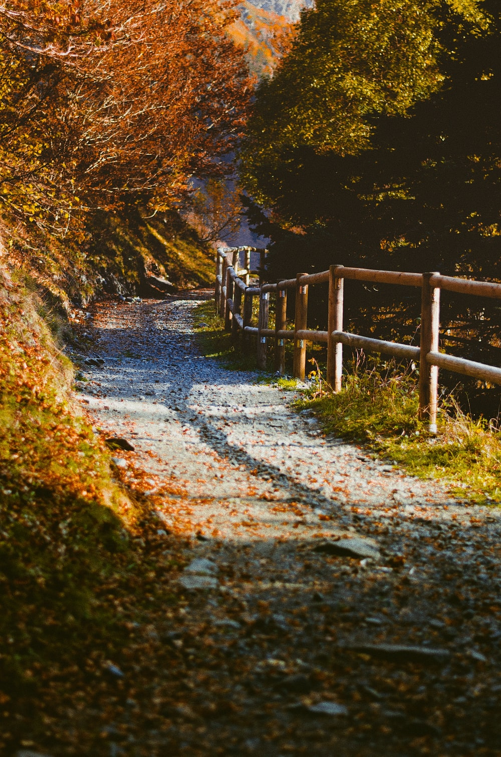 gray road near brown wooden fences and brown leaf trees
