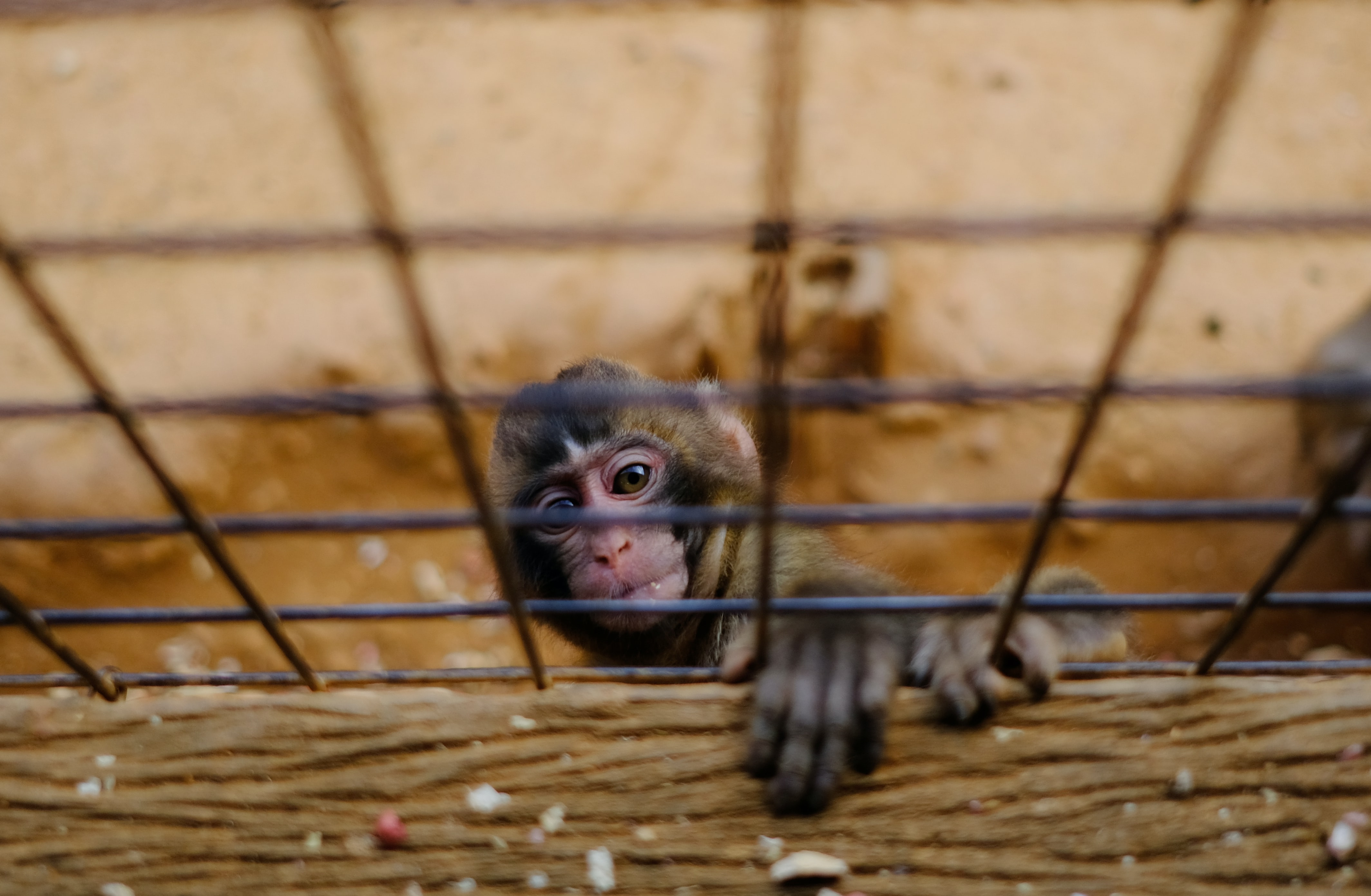 monkey climbing on cage