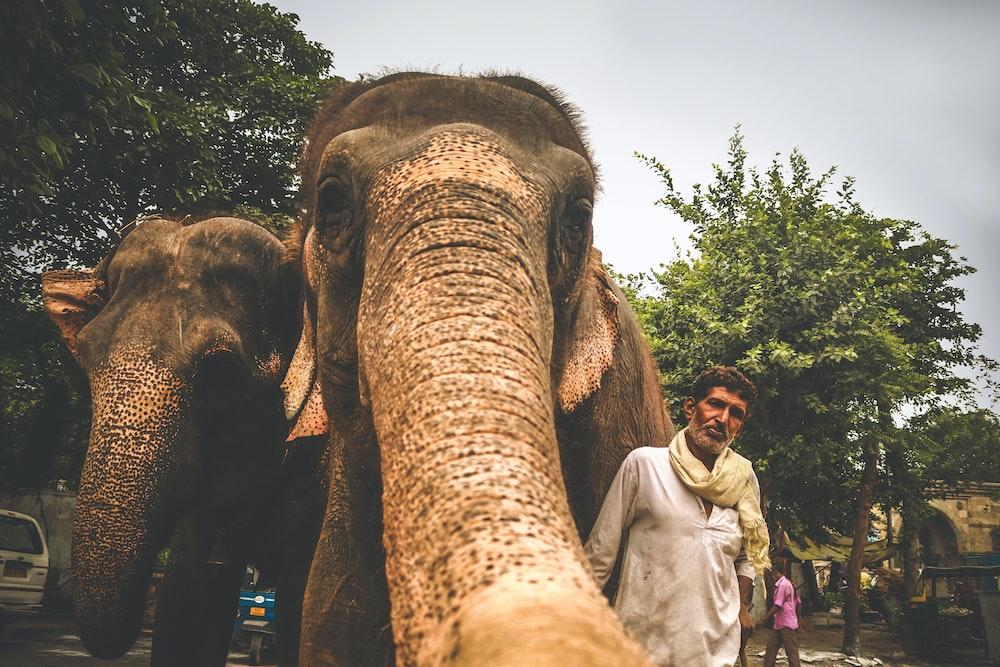 man standing beside two elephants