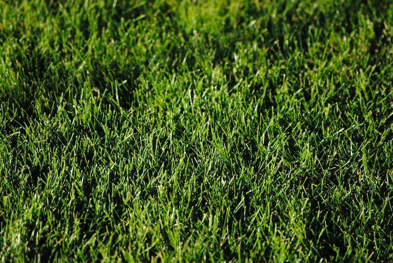 fertilize my lawn