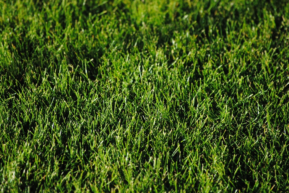 green grass during daytime