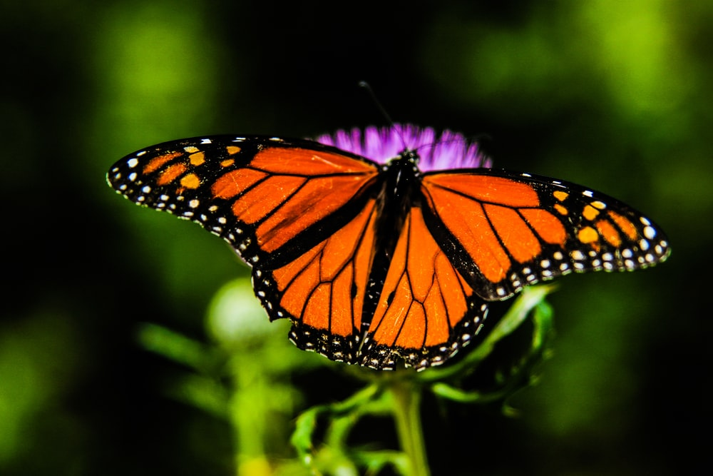 shallow focus orange and black butterfly