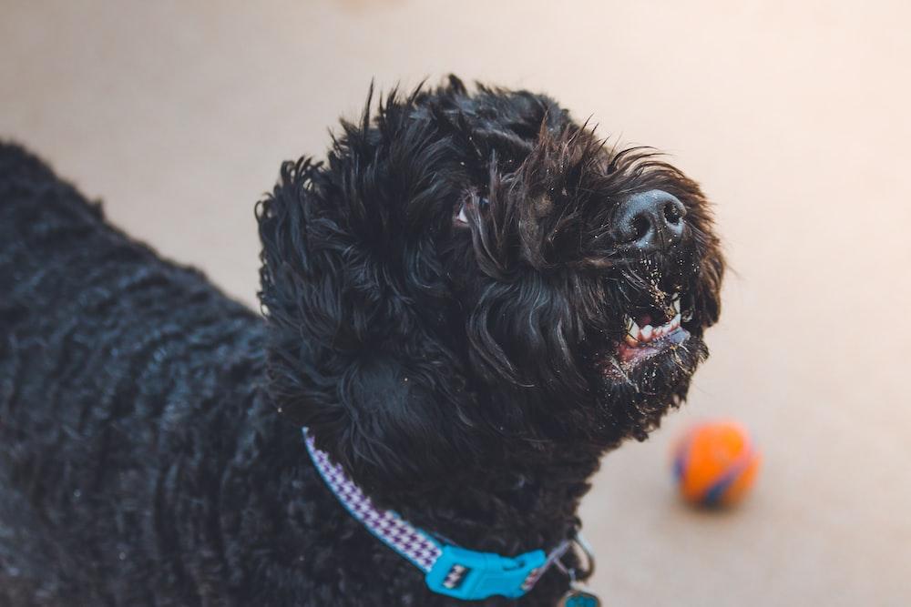 photo of black dog on white surface