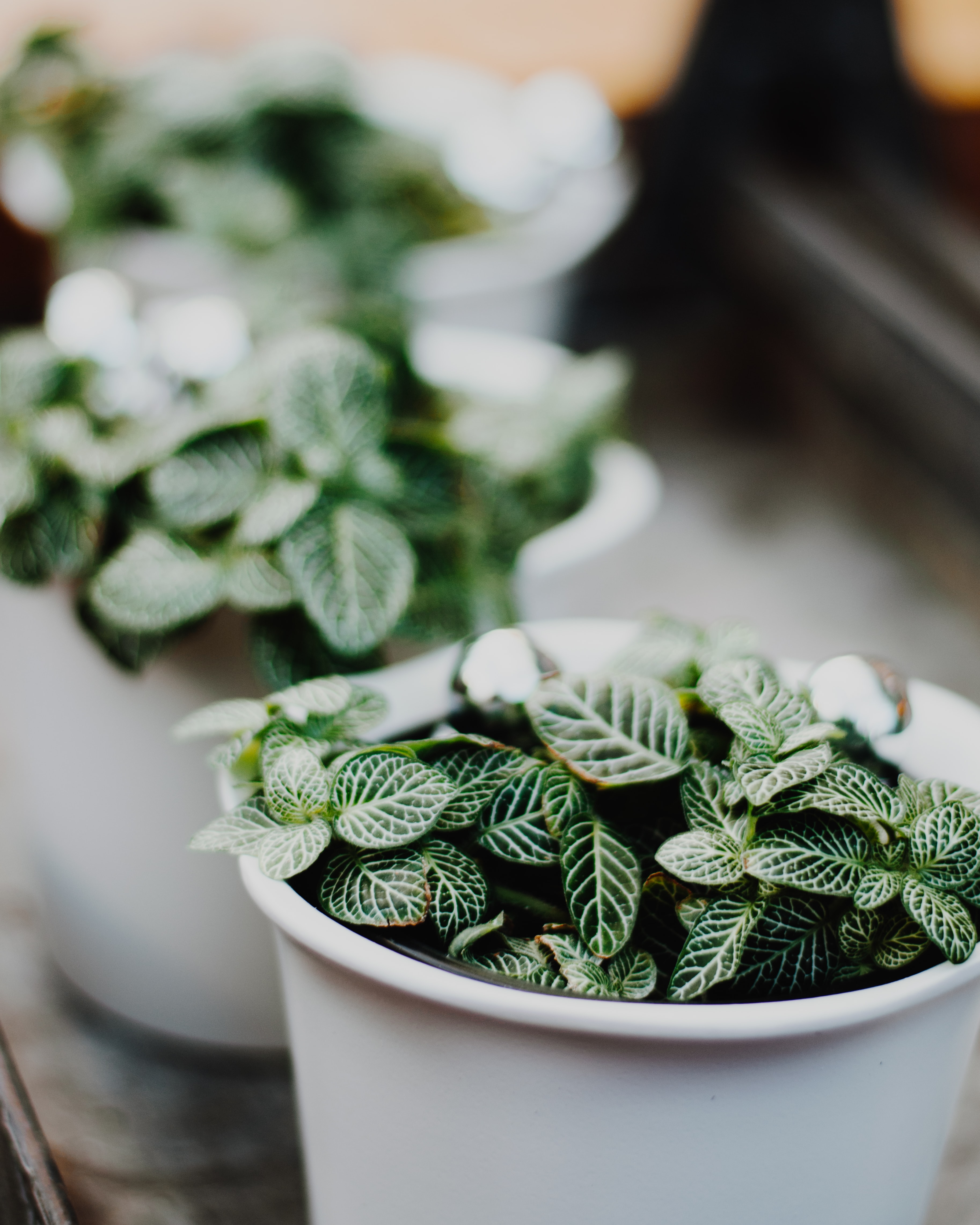 green leaf plant on white pot
