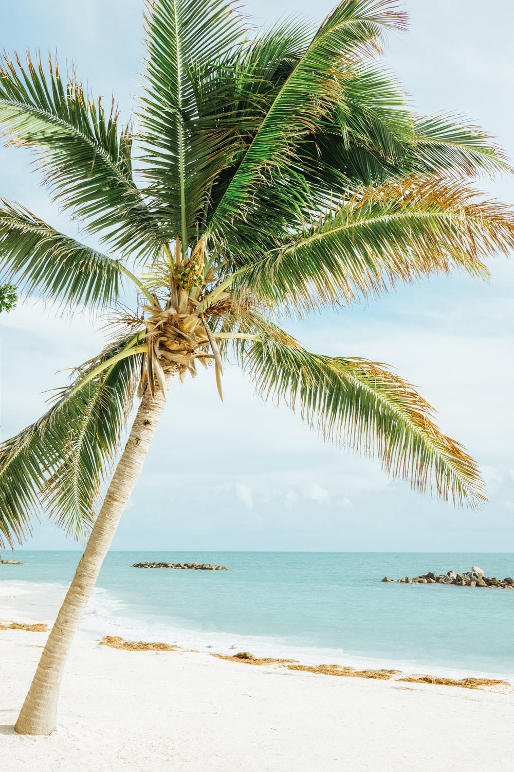 green leafed coconut tree near sea