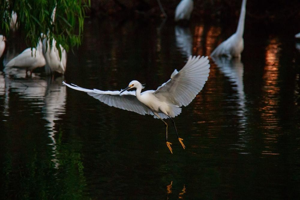 heron bird flying above body of water