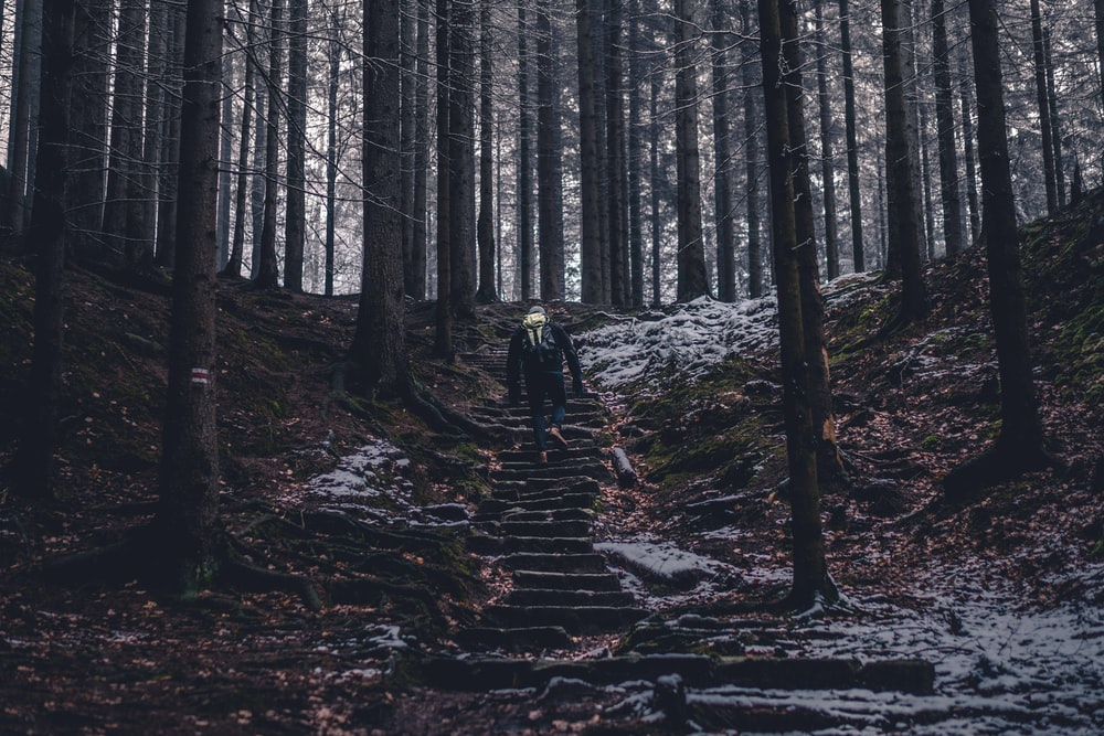 person climbing stairs in the middle of the forest