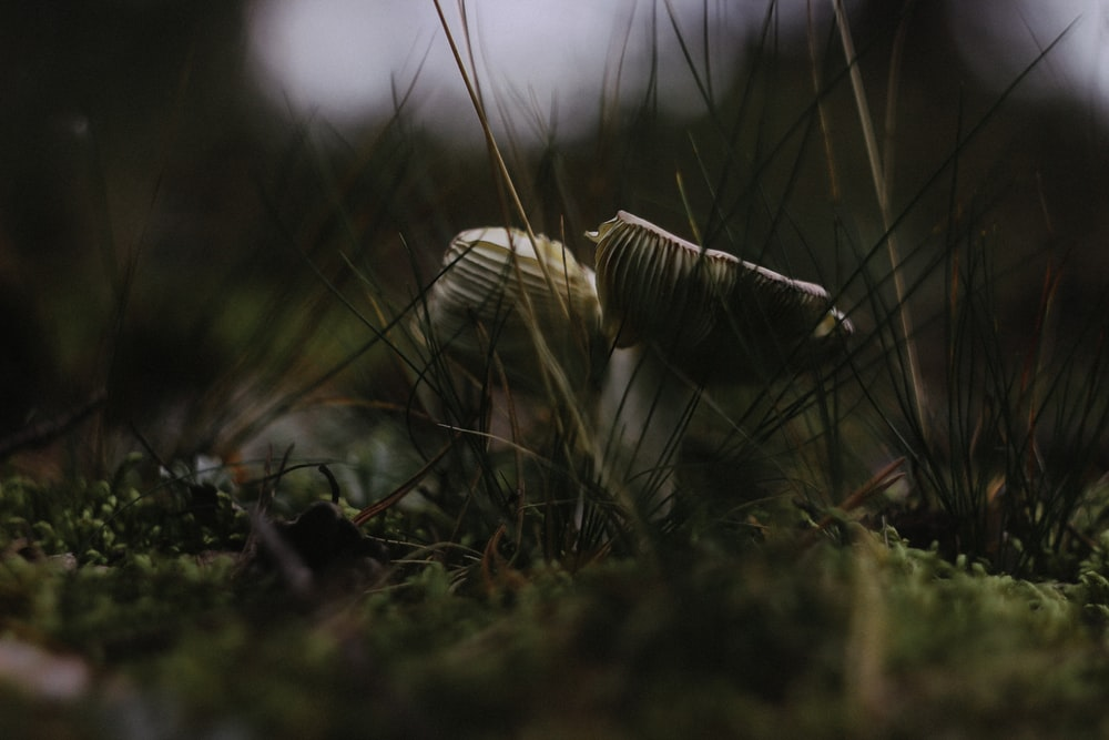 selective focus photography of white mushroom