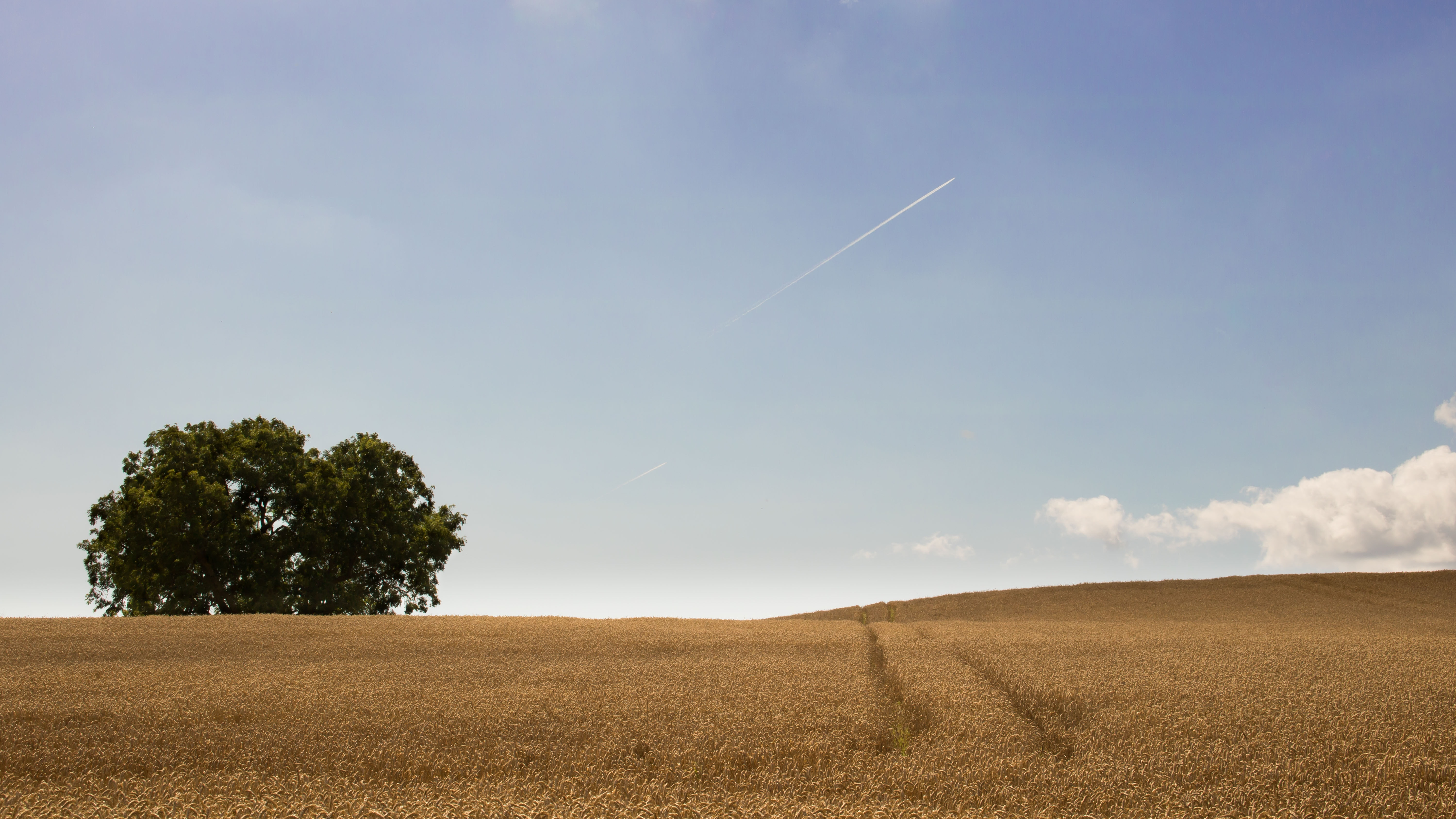 dried grass field with one tree
