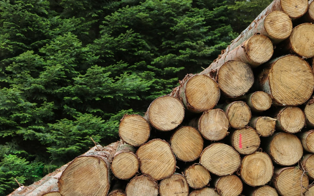 tree logs photography