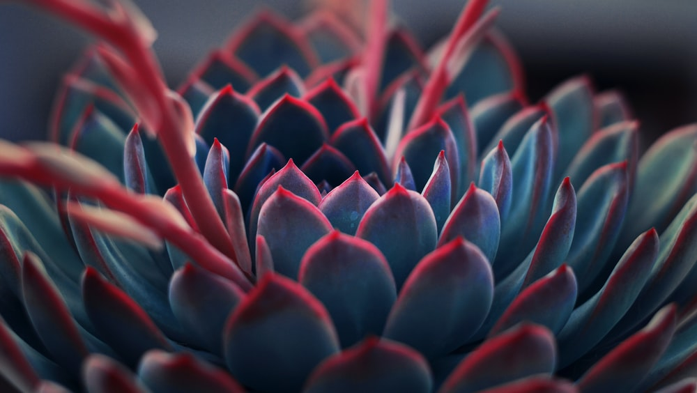 close up photography of succulent plant