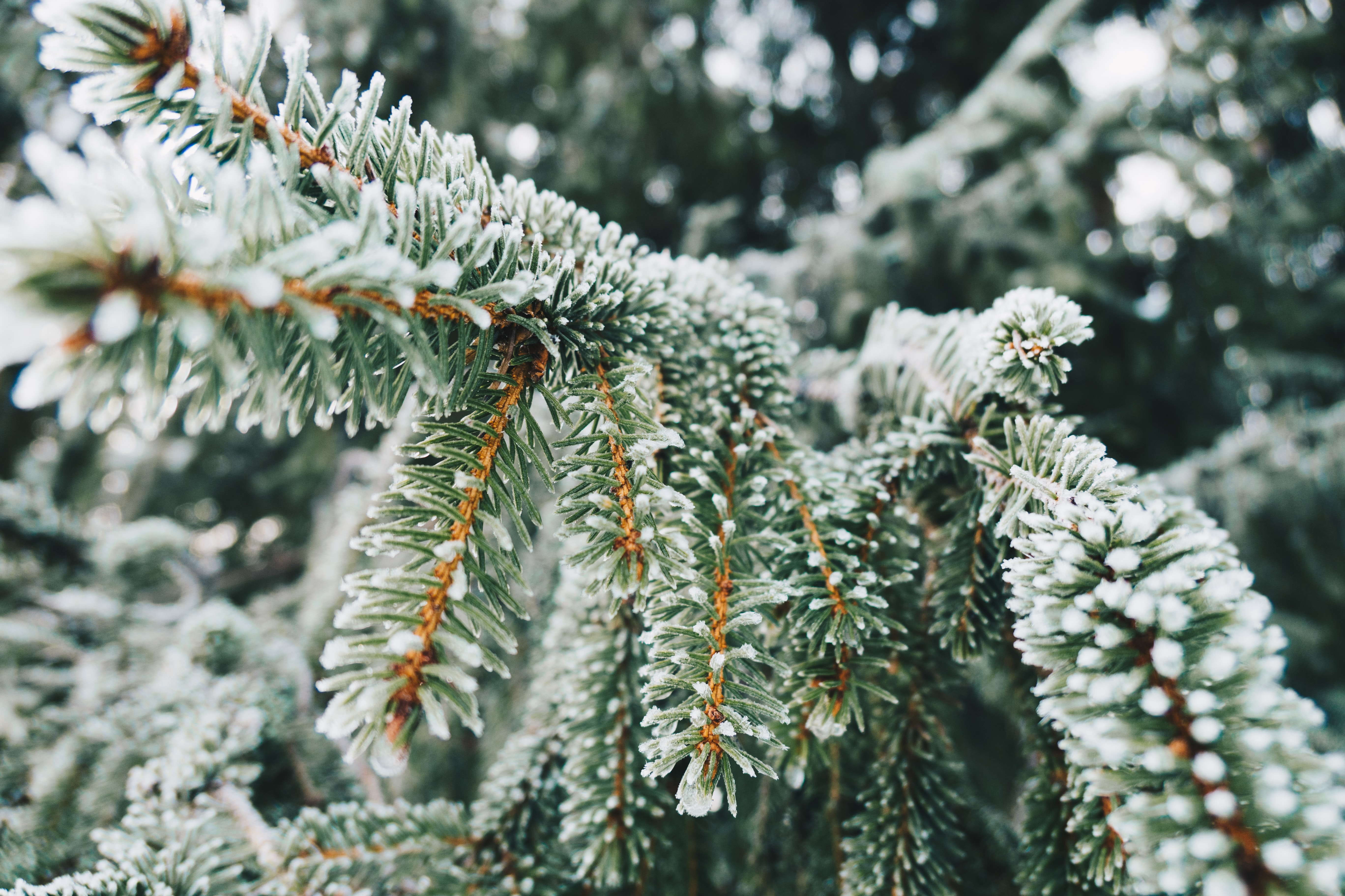 green leaf plant covered with white snow