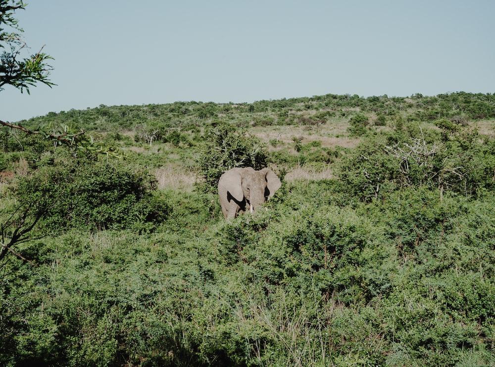 elephant standing near trees