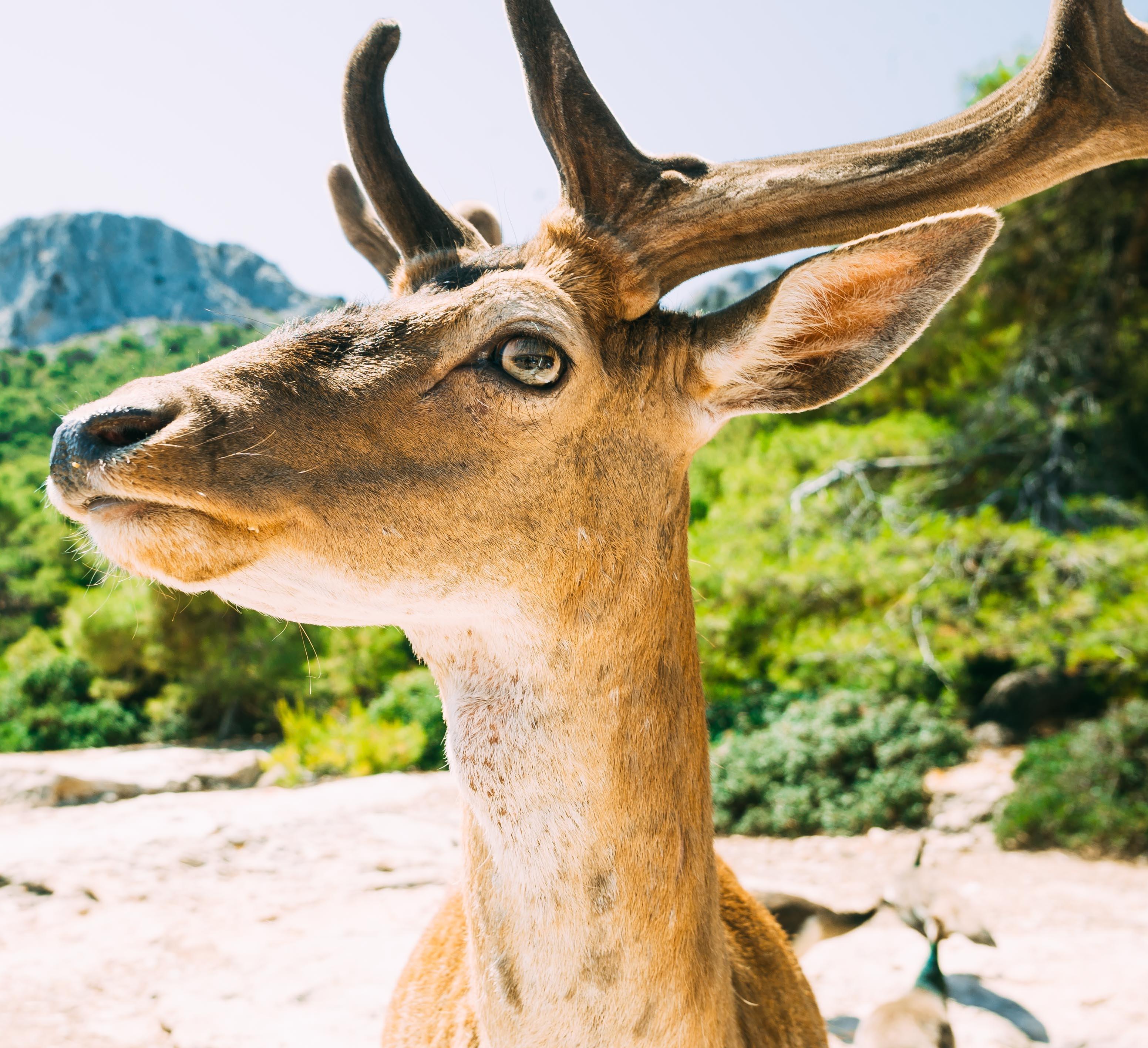 brown deer near trees closeup photography