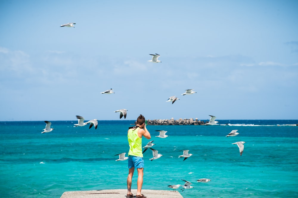 person standing on dock taking picture of seagulls