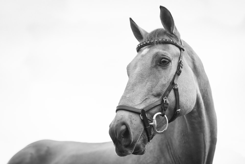 gray scale photo of horse