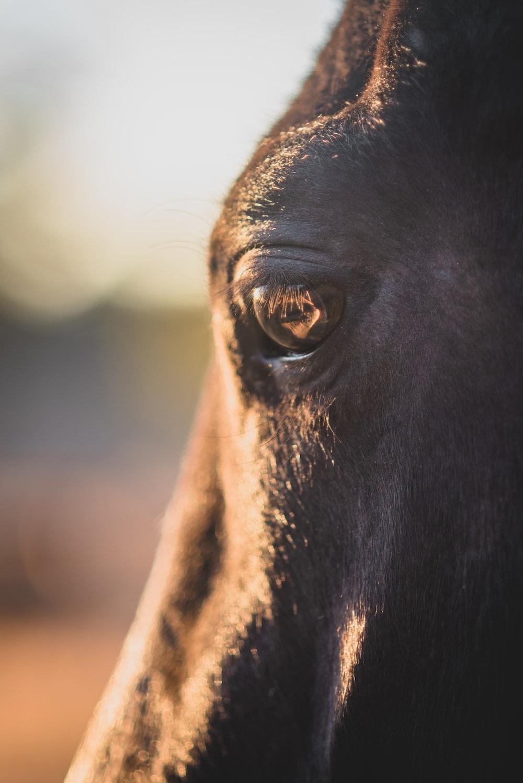 shallow focus photography of of animal eye