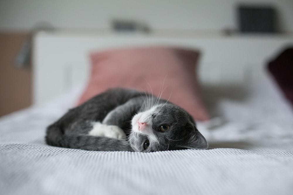 kitten lying down on bed