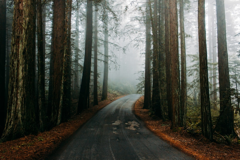 landscape photography of empty winding road surrounded by trees