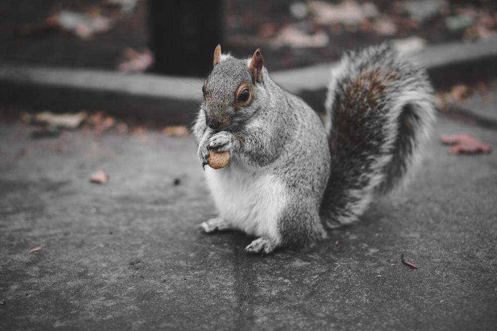 squirrel eating fruit