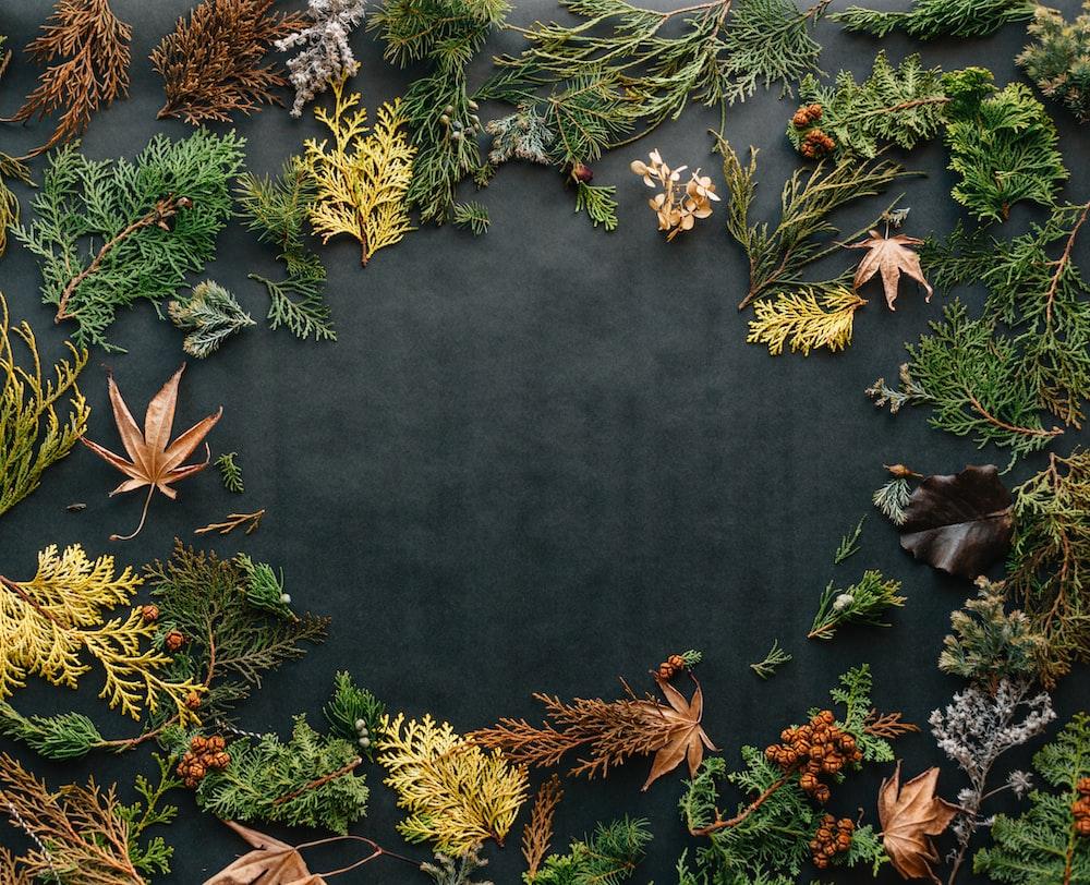 assorted leaves on black textile