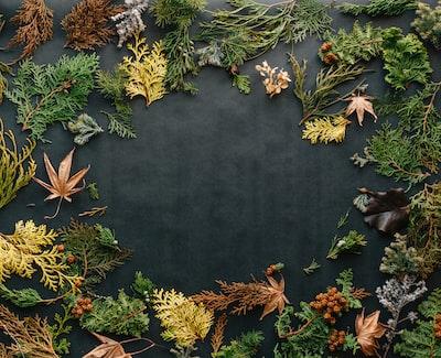 assorted leaves on black textile backdrop zoom background