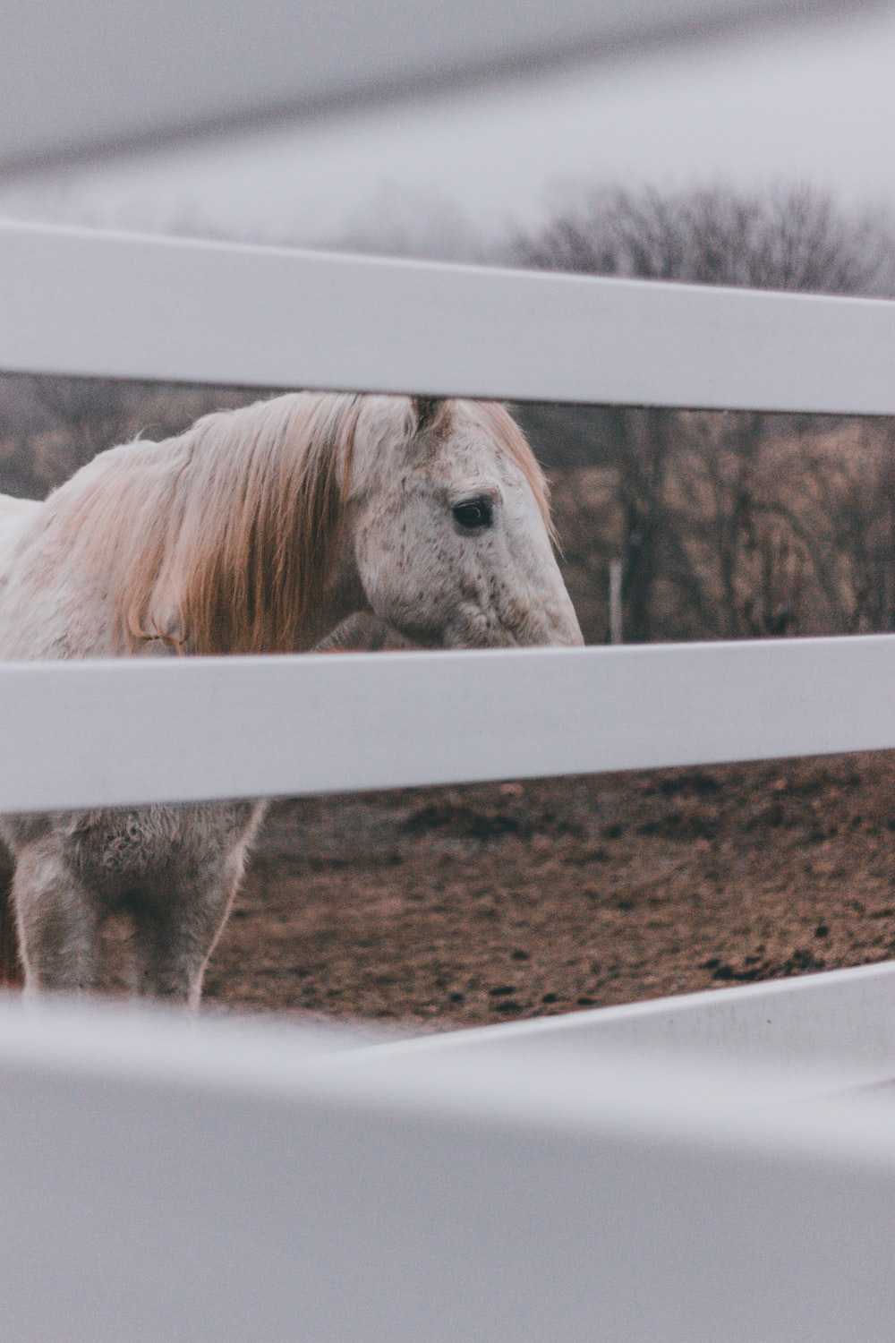 white horse near fence