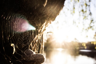 focus photography of spider web