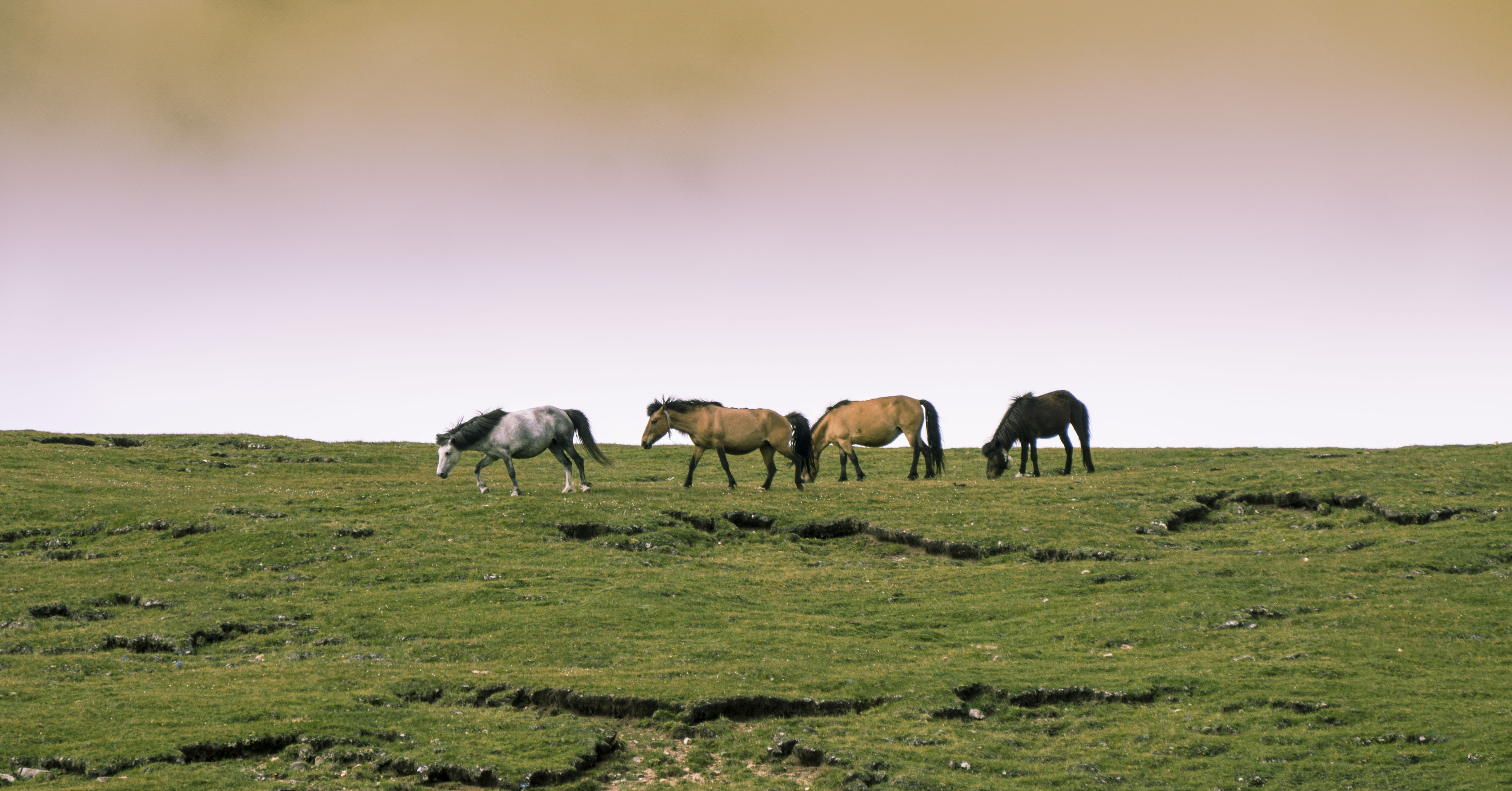 four horses in an open field at daytime