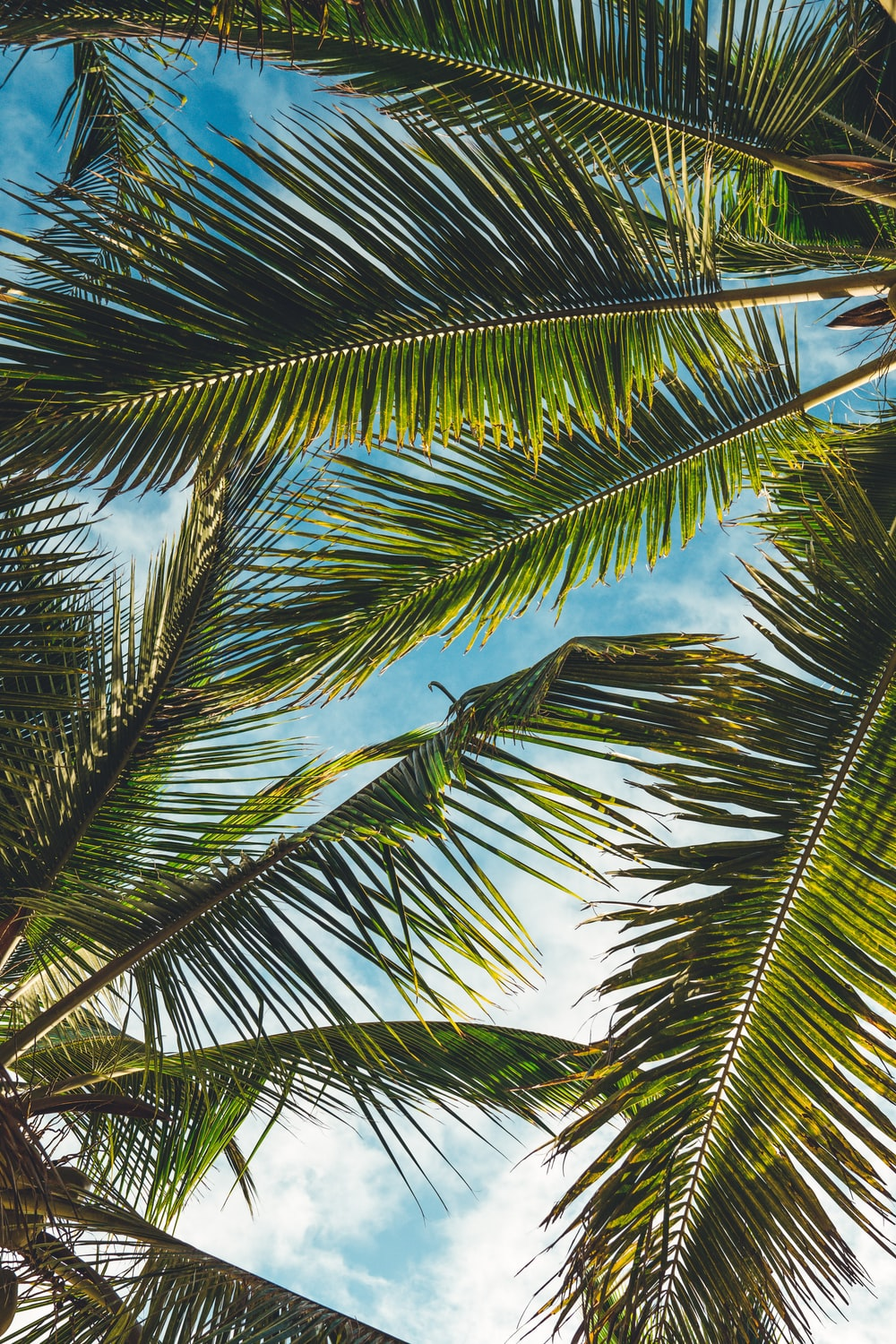coconut tree leaves under blue sky during daytime