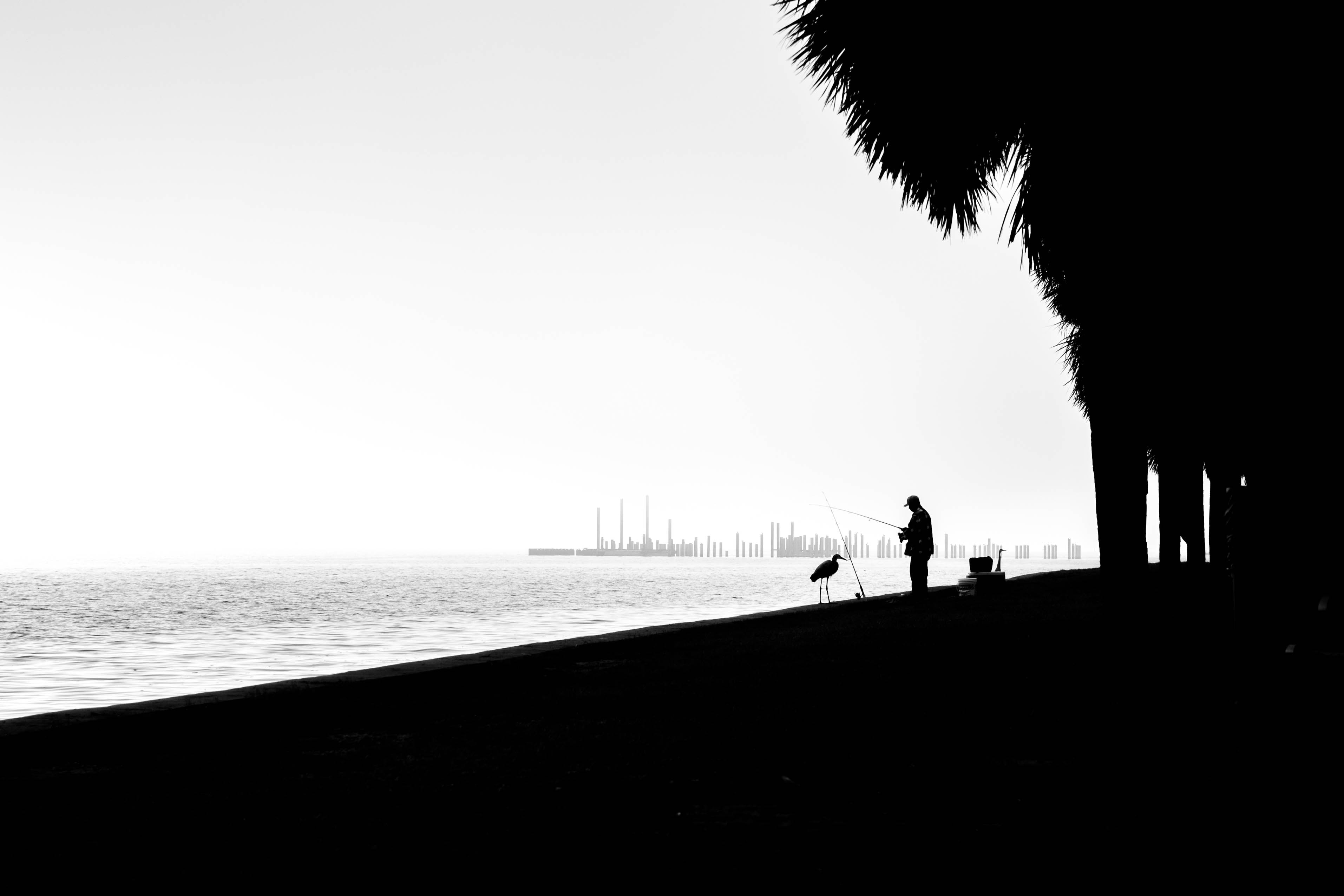 silhouette of person standing beside beach