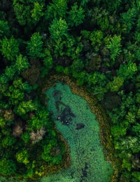aerial view of green trees and swamp
